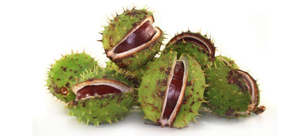 Aesculus Hippocastanum Horse Chestnut Extract
